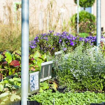 vaste-planten-schonenberg-7116