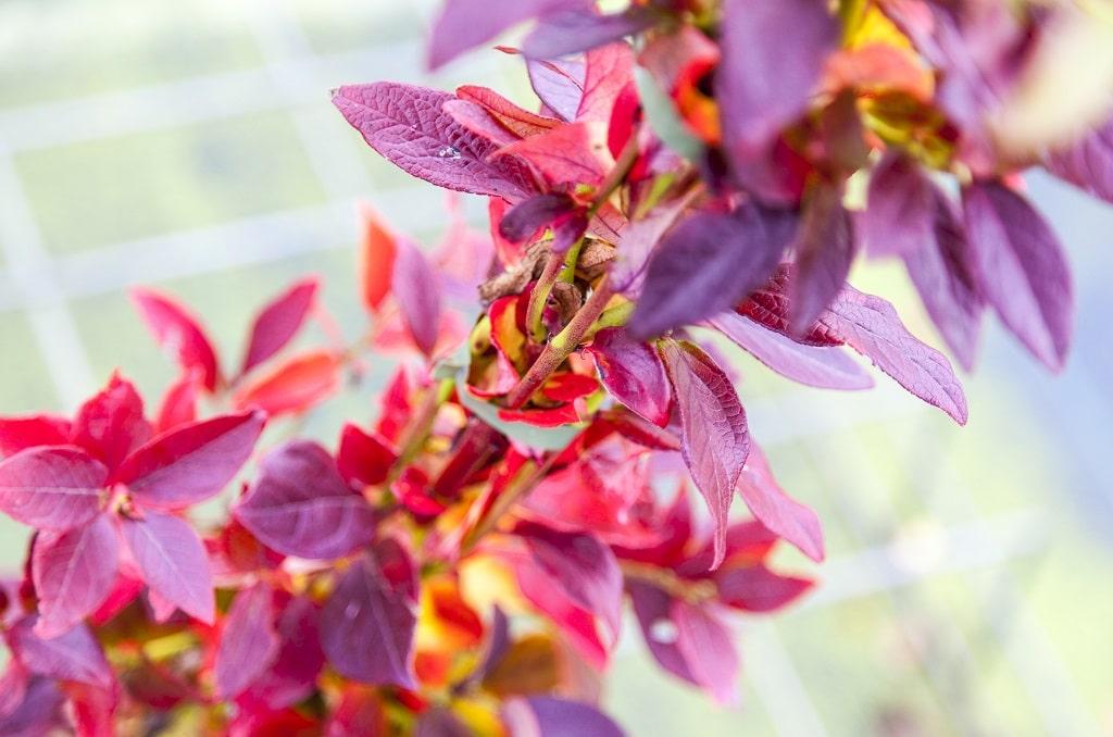 blog herfsttijd is planttijd