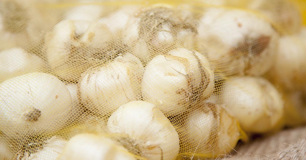Bloembollen in een netje