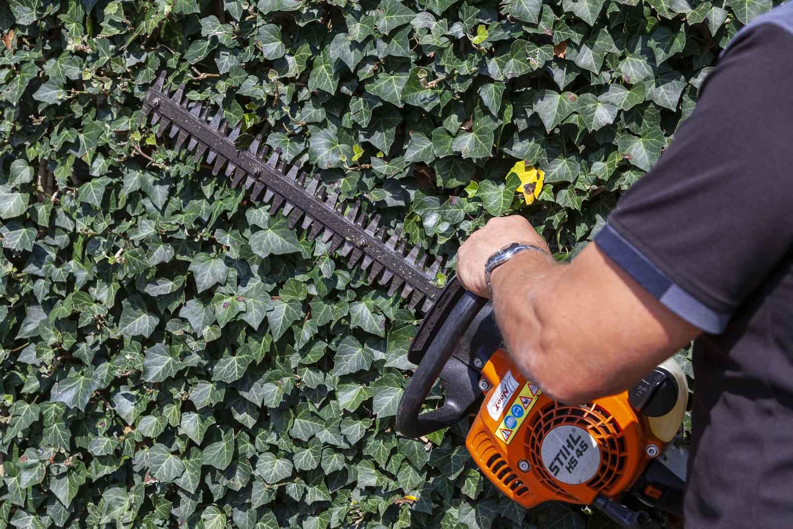 Gert-Jan Schonenberg knipt een Hedra met een elektrische heggenschaar